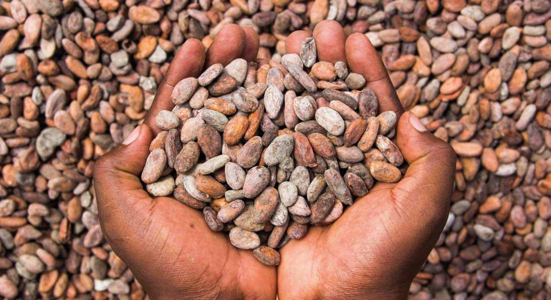 Buy premium quality cocoa